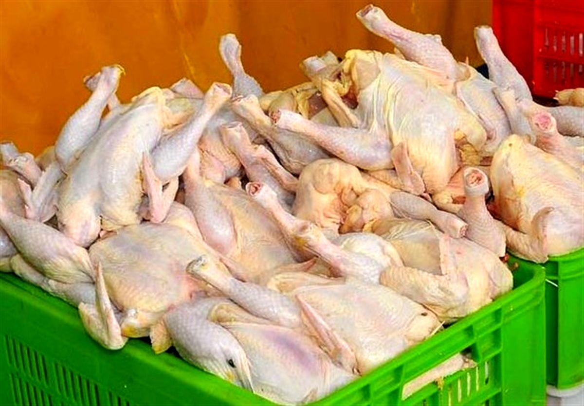 قیمت مرغ دوباره گران شد؛ ما شرمنده ایم!