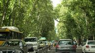 فاز دوم احیاء درختان چنار خیابان زیبای ولیعصر از جمعه