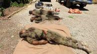 فوری/ انهدام تیم تروریستی در استان کردستان