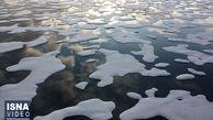 ببینید فاجعه وحشتناک در اقیانوس منجمد شمالی