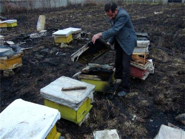 زنبور ها سوختند