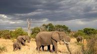 تشدید محدودیتهای شکار در تانزانیا