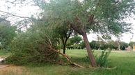 گزارش تصویری/ طوفان شدید خوزستان که موکبهای زائران اربعین را هم خراب کرد