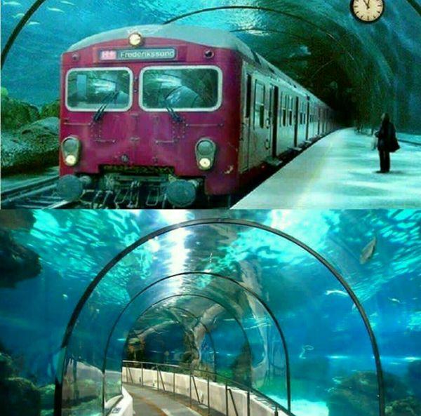 زیباترین مسیر زیر آبی  جهان را بشناسید (عکس)