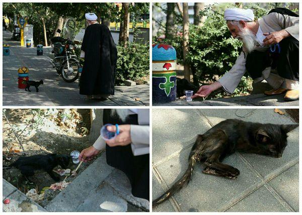 اقدام یک روحانی پس از مشاهده گربه بیمار و تشنه