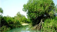 اقدام ملی برای حفاظت از جنگل های حرا