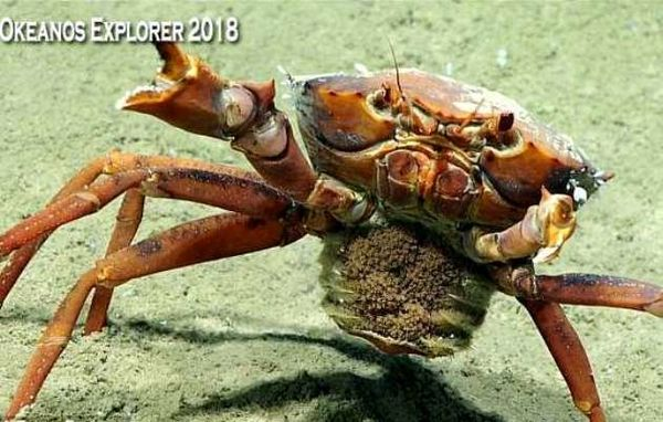 تصاویر موجودات عجیب در عمق 1500 متری خلیج مکزیک